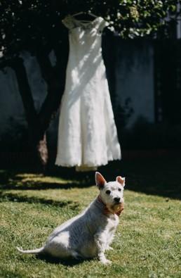 westie suknia ślubnia