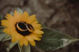 obrączki na słoneczniku