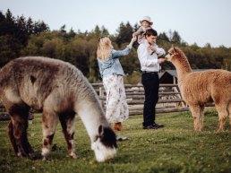Sesja rodzinna z alpakami w okolicach Prudnika 12