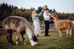 Sesja rodzinna z alpakami w okolicach Prudnika 8
