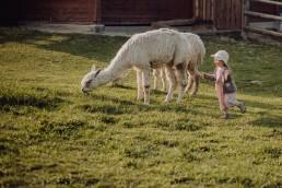 Sesja rodzinna z alpakami w okolicach Prudnika 2