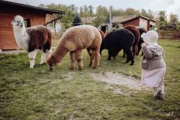 sesja z dziećmi alpaki