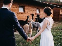 zdjęcia ślubne z lamami