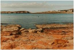 Malta zimą - wiosna w zimie - Valetta i Gozo zimową porą 21